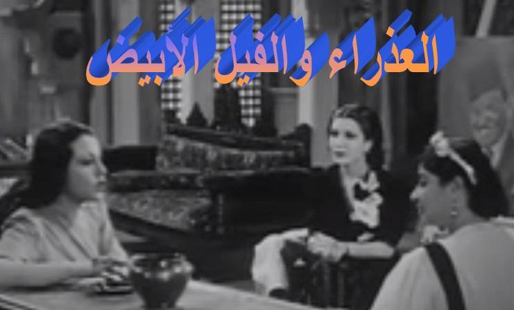 بقلم : ياسر سليمان